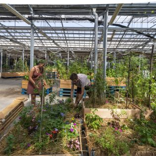Ferme urbaine L'agronaute © Valéry Joncheray_Samoa